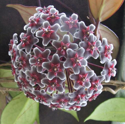 Мир комнатных растений прекрасен и
